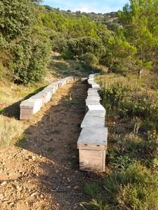 colmenas-de-abejas-alicante